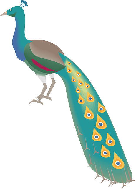 digital, bird, wings, art, peacock, animal, tail