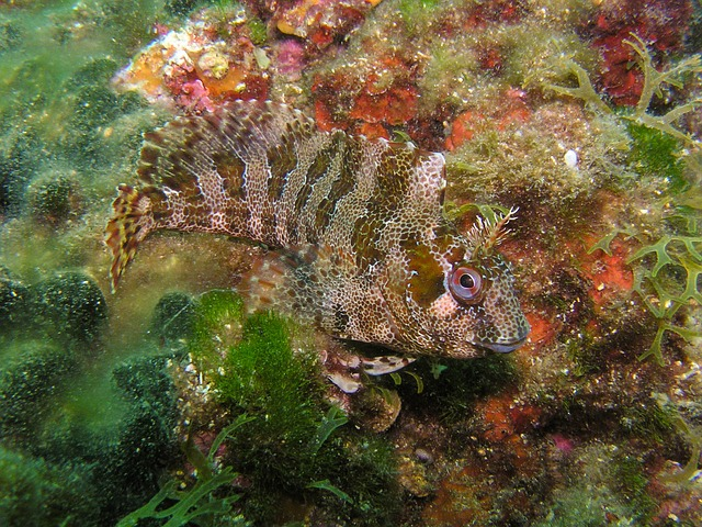 diving, underwater, fish, sea, camouflage, disguised