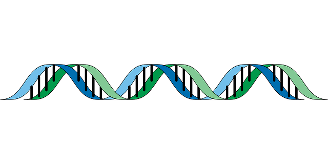 dna, gene, genetic, helix, rna, mutagenic, heritage
