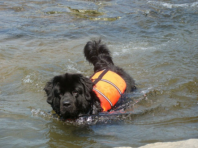 dog, animals, river, water, rescue