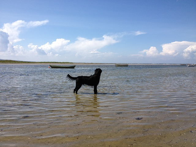 dog, black, black dog, water, nature, landscape, booked