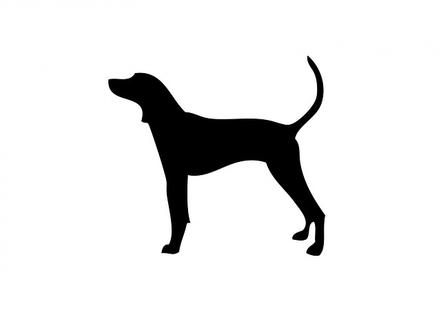 dog, coonhound, animal, canine, pet, black, silhouette
