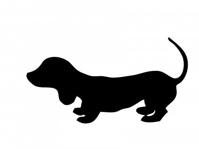 dog, dachshund, puppy, cute, animal, pet, canine, black