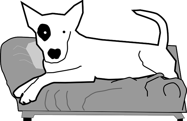 dog, pet, animal, hound, simple, white, couch, sofa