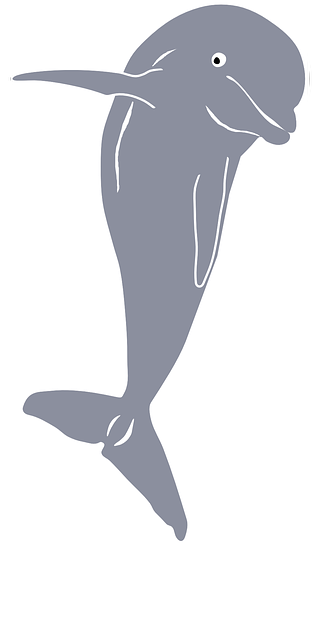 dolphin, mammal, fish, animal, cetacean