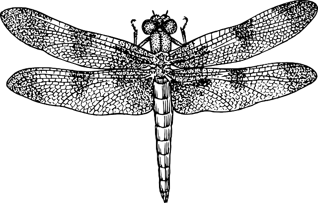 dragon, black, diagram, outline, drawing, silhouette