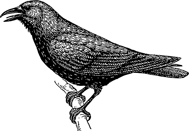 drawing, bird, branch, crow, wings, tail, feathers