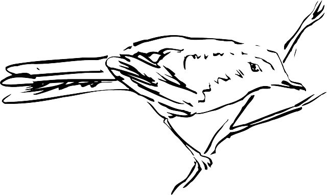 drawing, bird, branch, standing, animal, feathers