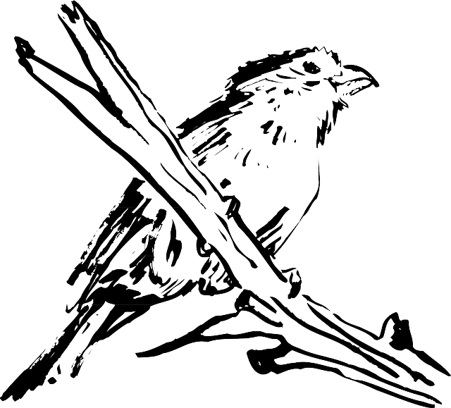 drawing, bird, branch, wings, animal, feathers, perched