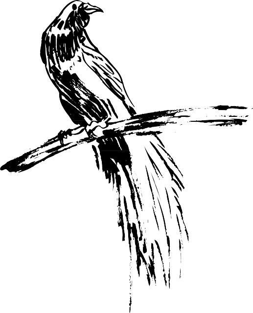 drawing, bird, branch, wings, art, animal, feathers