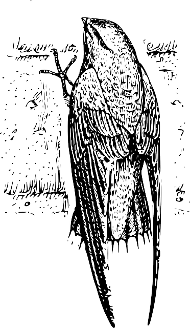 drawing, bird, wings, chimney, tails, feathers, swift