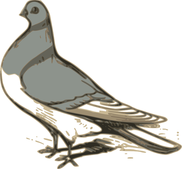 drawing, feather, cartoon, birds, bird, grey
