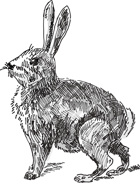 drawing, rabbit, animal, tail, ears, alert, whiskers