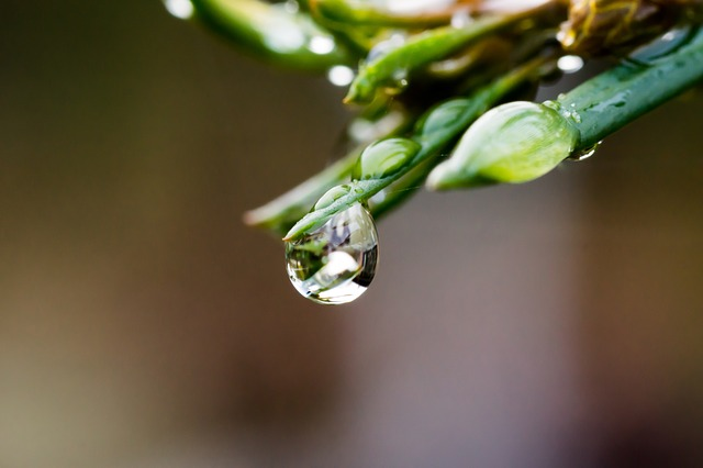 drop of water, drip, water, dew, plant, mirroring