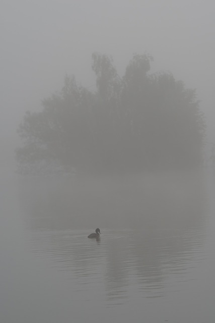 duck, bird, water, fog, wings, feathers, island, shade