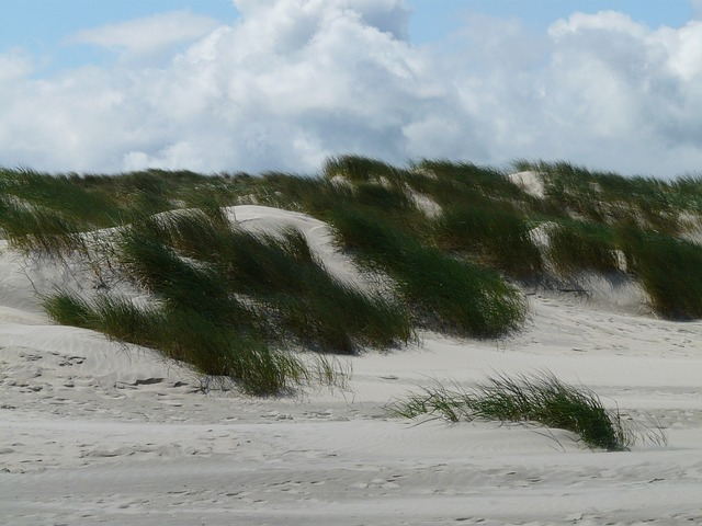 dunes, north sea, sea, beach, sand, marram grass
