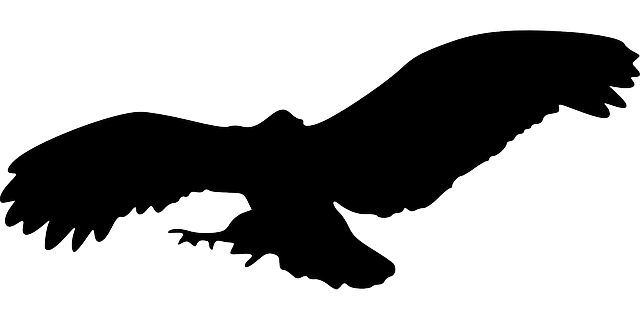 eagle, bird, animal, flying, silhouette