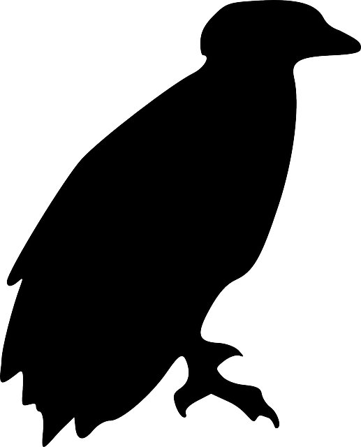 eagle, bird, animal, perching, silhouette