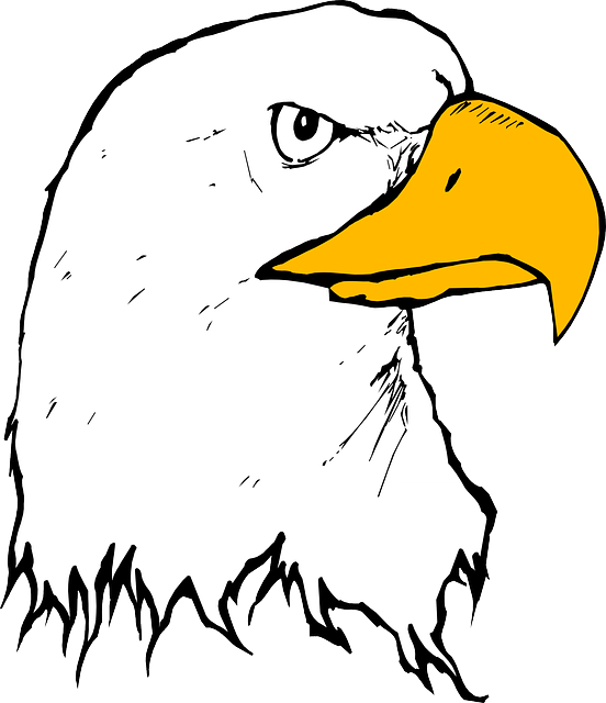 eagle, bird, beak, head, animal