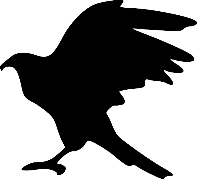 eagle, bird, flying, silhouette