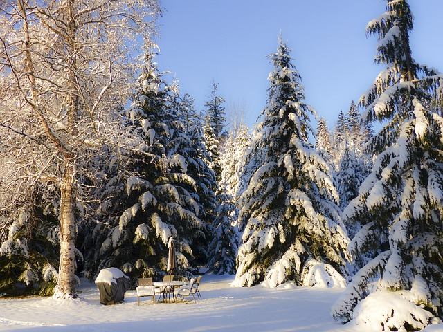 early, winter, dream, snow, cold, canim lake