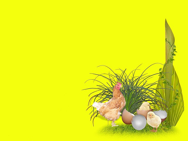 easter, eggs, chickens, chicks, joy, holiday, grass