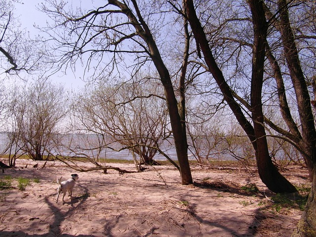 elbe, nature conservation, riparian zone, beach, trees