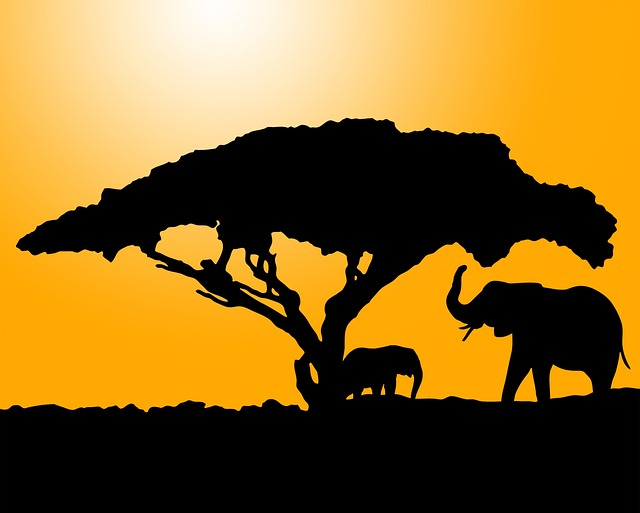 elephant, elephants, animal, animals, black, silhouette