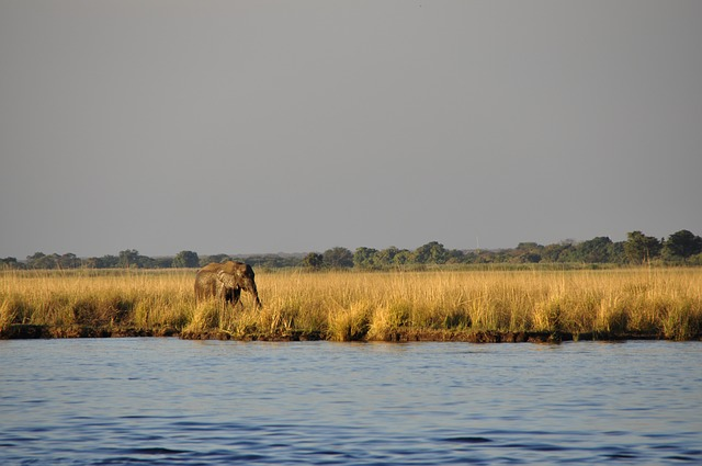 elephant wasserelefant, hiking, lonely, river, water
