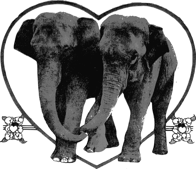 elephants, animals, heart, lovers, romance