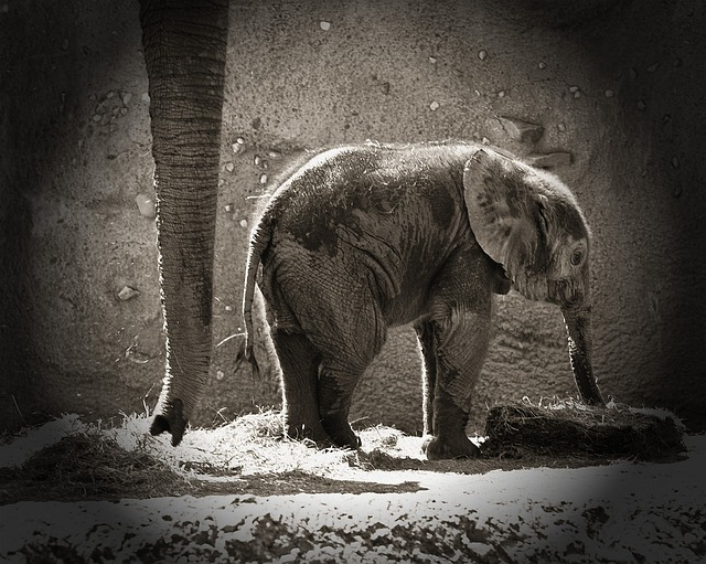 elephants, newborn, animals, zoo, mother daughter