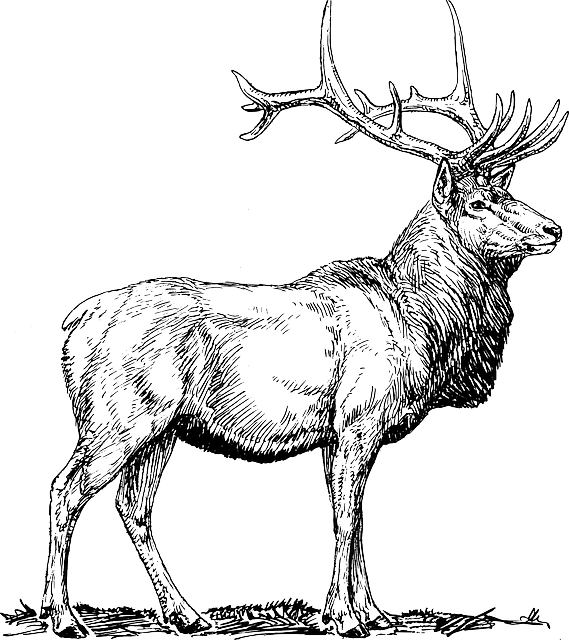 elk, moose, deer, head, animal, drawings, hunting