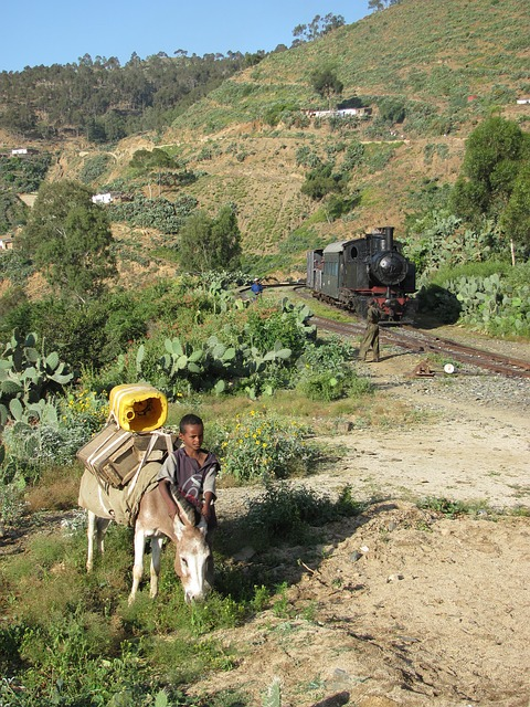 eritrea, landscape, boy, donkey, train, hills, trees