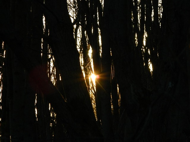 evening, sun, forest, trees, countryside, tree, natural