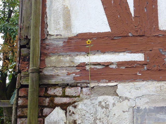 fachwerkhaus, truss, masonry, old, home, flower, farm