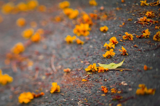 fall, photography, yellow, artistic