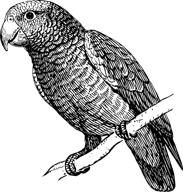 feather, bird, branch, wings, parrot, perched, feathers