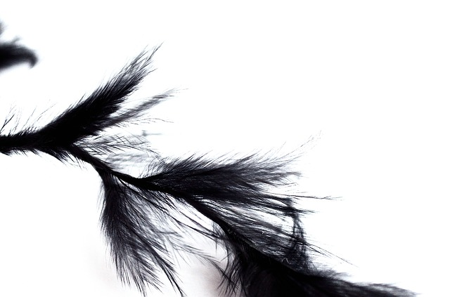 feathers, black, background