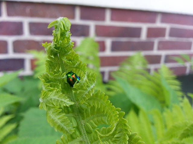 fern, green, plant, beetle, nature, insect, animal