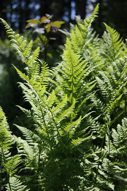 fern, nature, green, plant