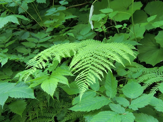 fern, plant, green, forest, leaves