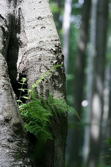 fern, wood, green, plant, nature, leaves, plants