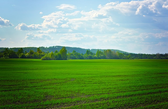 fields, green, agriculture, crops, grass, nature