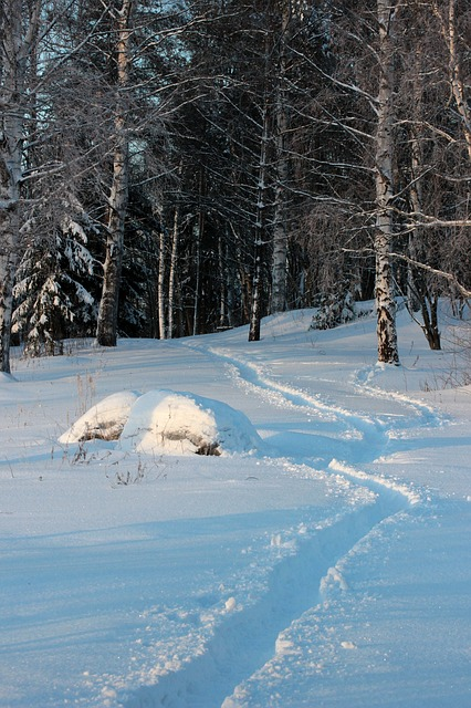 finland, landscape, forest, trees, woods, winter, snow