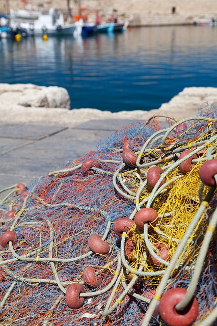 fishing net, harbor, boat, fish, marine, port, ocean
