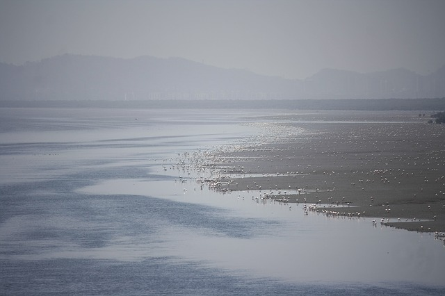 flamingos, ocean, strand, animals