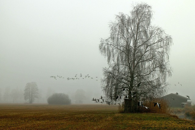flock of birds, landscape, fog, haze, atmosphere
