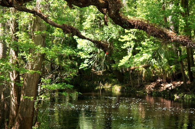 florida, stream, creek, water, nature, brook, beautiful