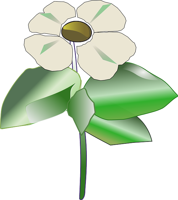 flower, cartoon, plant, pacific, leaves, floral