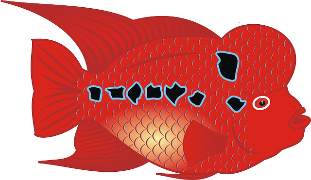 flower fish, animals, red, horn, animal, horns, fish